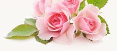 שמן ורדים